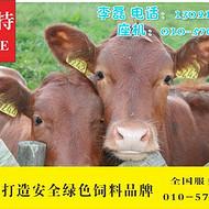小黄牛饲料  家养土牛杂交牛用什么饲料好  利斯特-犊快长
