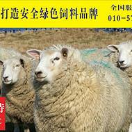 羊怎么才能养好    养羊专业户必看  北京利斯特五一放大招