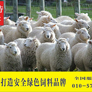 中国克隆羊都在吃的预混料  利斯特-羊壮圆