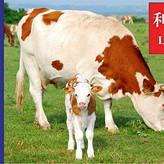 择牧久远的牛羊预混料怎么样   择牧久远饲料效果好不好 牛羊预混料认准利斯特