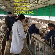 大型养羊场哪里有,养殖合作