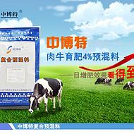 吃什么预混料可以让肉牛快速育肥增肥
