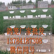 中卫鸽子笼生产厂家大量批发/三层鸽子笼养殖笼/铁丝镀锌