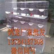 吴忠镀锌鸽子笼/三层十二位鸽笼厂家批发价格