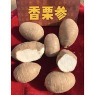 现代农业观光园高端品种香栗参