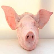 涿州猪头批发,涿州去耳猪头批发,保定整猪头批发,猪肉批发