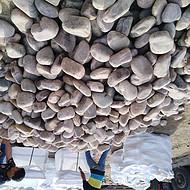 黄山祁门县鹅卵石一吨多少钱