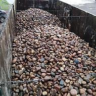 银川鹅卵石质量标准