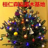 云杉圣诞树 云杉盆景 辽宁云杉基地 云杉价格 云杉小苗 真圣诞树 鲜活圣诞树