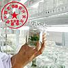 脱毒型草莓苗优势 2018组培草莓苗哪里有 产量高 病菌少根系发达首选组培脱毒苗