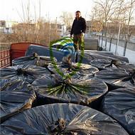 上海普陀区噪音治理公司、开发商专用地面减震隔音材料厂家直销、地面减震垫