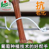 葡萄扎丝0.7 圆形塑料12cm 绑枝条绑丝 第三代园林猕猴桃捆缚线带