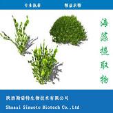 海藻提取物 海藻提取物10:1 海藻多糖 斯诺特生物 厂家现货包邮