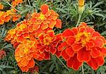 广场花卉造型,花坛花卉造型设计施工,花卉基地一手供应