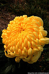 花坛常用花卉种类