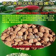 毛桃种批发毛桃胡一斤多少钱