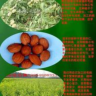 桃核价格桃籽种子价格行情