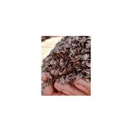 广西杉木种子那个品种好-速生杉木种子育苗种植技术图片