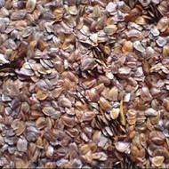 云南杉木种子邮购批发价格-速生杉木种子育苗技术图片