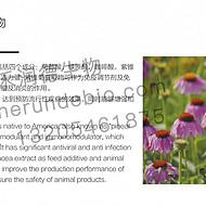 紫锥菊提取物,抗菌消炎,代替抗生素饲料添加剂