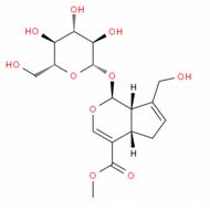 京尼平苷 24512-63-8   西安天资生物科技有限公司