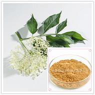 金花茶提取物  速溶粉 浸膏粉 浸膏 黄酮 多糖 提取液80-100目