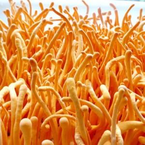 费县盛成农业科技有限公司