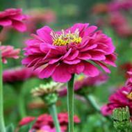 花卉种子品种介绍