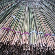 大量批发细竹竿 搭菜架绑树苗工艺品细竹子