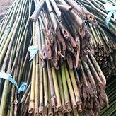 批发圣女果支撑架竹子