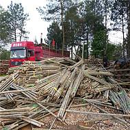 大量供应雄安新区用的粗细绿化竹杆