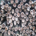 大量批发毛竹竿 电网搭架用的竹竿