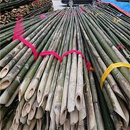 供应编蒜箔用的4米5米小竹杆 江西苦竹杆