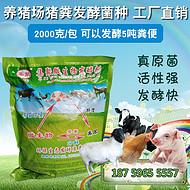 发酵床菌种哪种好?漳州集聚发酵床专用菌种生产厂家