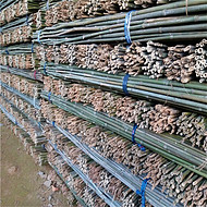供应江西小竹竿 蔬菜支撑葛根绑缚果树绑缚旗杆竹工艺品竹子