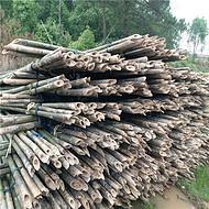 大量供应6米竹竿 树木支撑果蔬大棚竹竿
