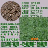 黑麦草种子量大批发价格