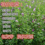 紫云英种子的价格怎么卖
