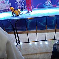 新野县枣园猕猴养殖场提供猴艺表演