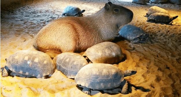 天津绿之语动物养殖有限公司