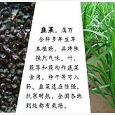绿肥种子厂家
