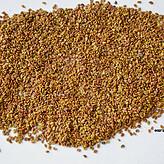 浙江箭舌豌豆种子哪有卖