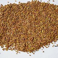 云南苕子种子绿肥种子现货批发