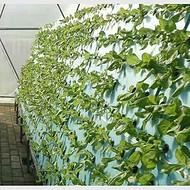 无土栽培 实验水培种植 高密度浮板 无土育苗 蔬菜栽培开孔泡沫板