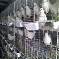 鸽子笼厂家批发价格 三层十二位鸽笼网片 镀锌铁丝网