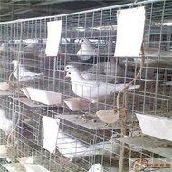 四层十六位鸽子笼带配件批发 鸽笼接粪板 乘粪板